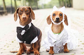 dog%20wedding_edited.jpg