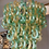 Thumbnail: Green and Gold Murano Glass C Link Chandelier