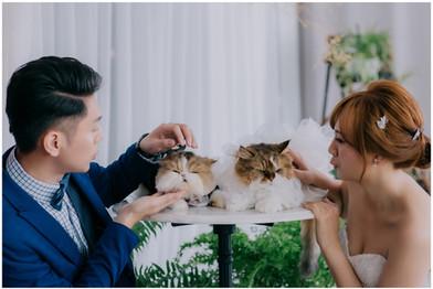 名珊 / 婚紗照 / 花卉實驗中心 / 龍鳳谷 / 自然捲攝影棚 / 寵物寫真 / 貓 / 柴犬 / 素人寫真