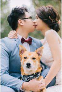 奕瑄 / 花卉試驗中心 / 黑森林 / 龍鳳谷 / 寵物寫真 / 柴犬 / 米克斯 / 自然捲攝影棚 / 素人寫真