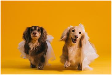 旻暄 / 高家繡球花田 / 黑森林 / 擎天崗 / 龍鳳谷 / 寵物寫真 / 臘腸犬 / 自然捲攝影棚 / 素人寫真