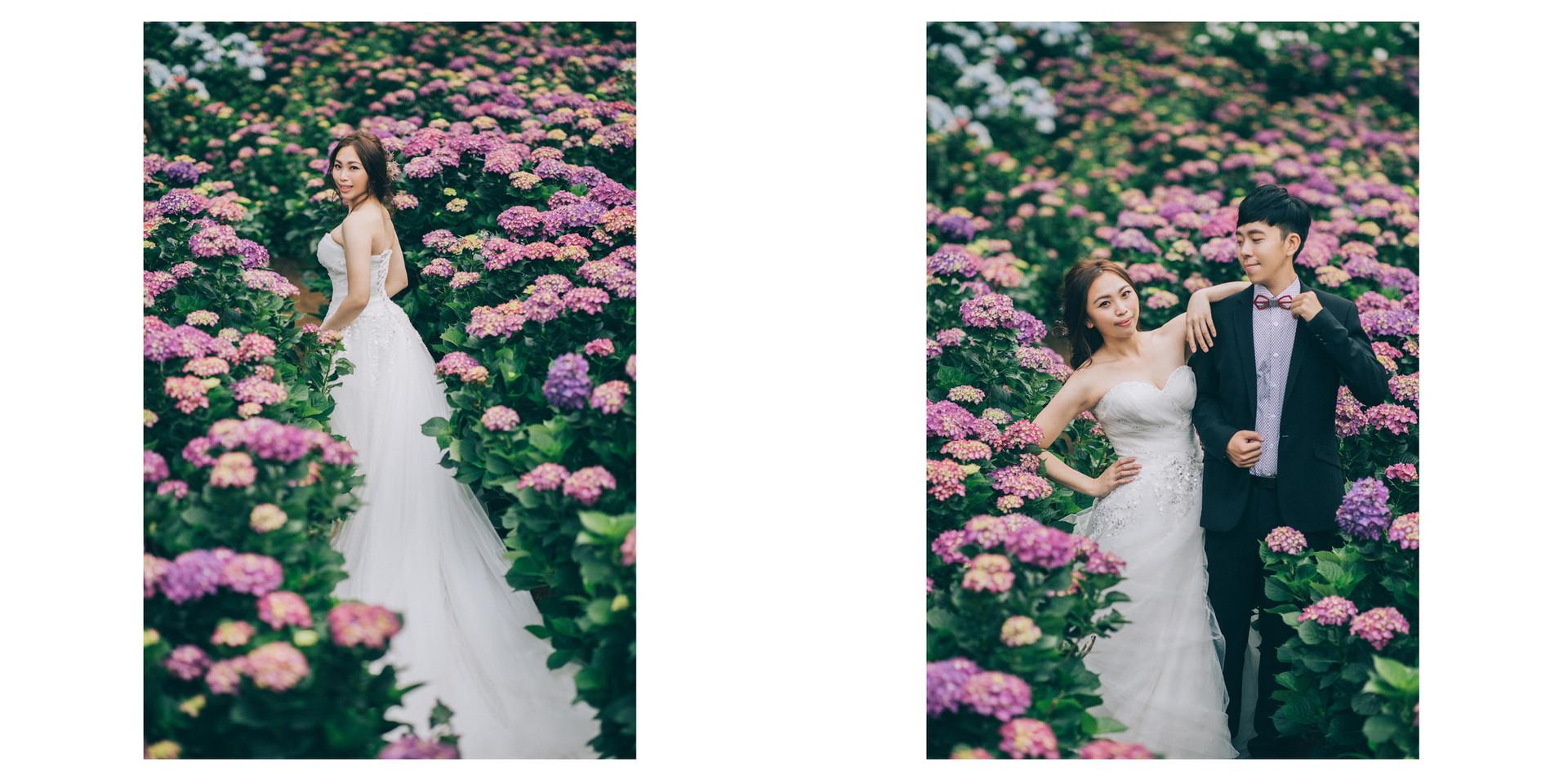 花卉試驗中心 / 高家繡球花園 / 黑森林 / 寵物婚紗 / 自然捲棚拍 / 素人寫真