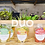 Thumbnail: Duo Pack (6 smoothies)