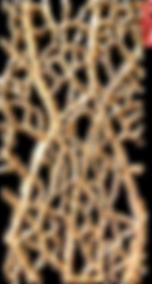 cactus core cast impression