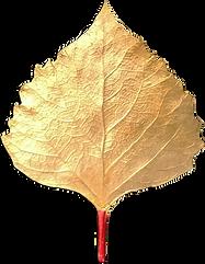 cottonwood leaf cast impression