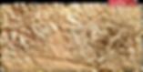 lichen cast impression