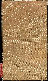 urchin cast impression