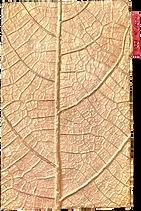 leaf cast impression