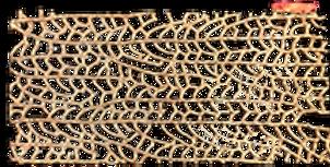fan coral cast impression