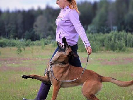 Using The Ball Under The Armpit To Teach Heeling