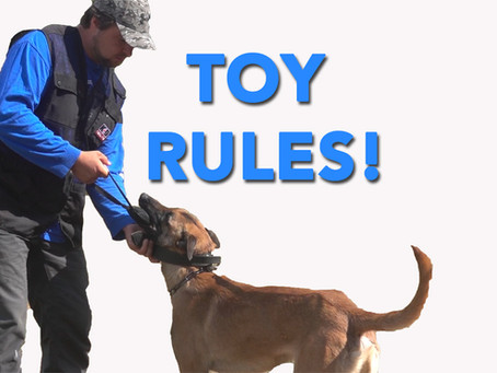 TOY RULES: The key to clear high drive obedience.