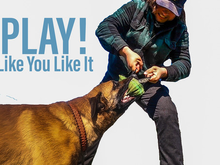 How Using Protection Style Playing Improves Your Obedience And Your Dog Training Skills
