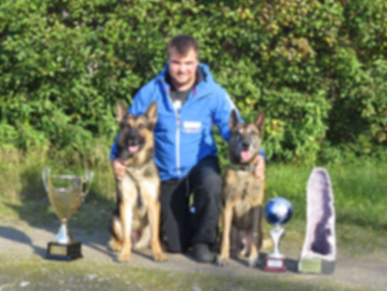 Online competition dog training