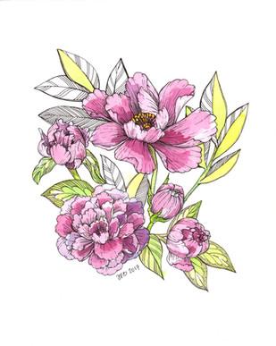 JoanPBogart Pink Poppy in Pen Ink FullEdited 2017 1.jpg