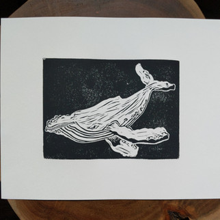 Humpback Whale, May 2019