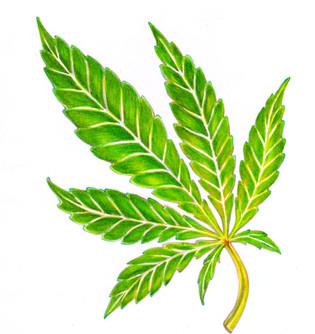 JoanPBogart Cannabis Sativa Hemp Leaf cropped edited 2016.jpg