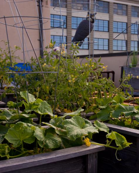 roof-garden-1-2.png