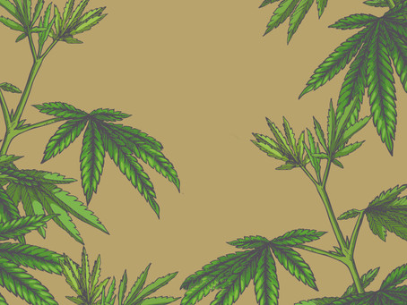 Textile Comparison: Hemp Vs Cotton