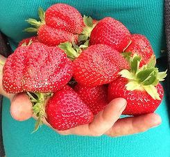 Strawberries in Hand Oksana'.JPG