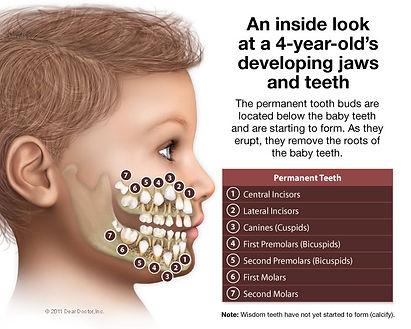 kids-developing-jaws-teeth.jpg