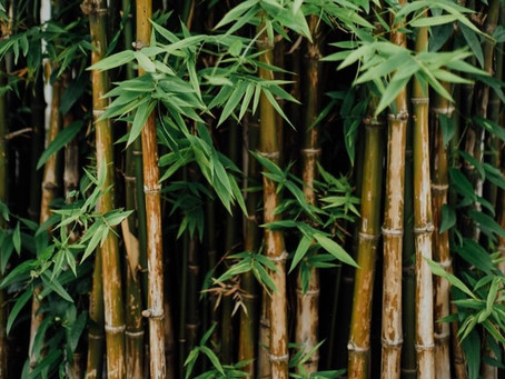 Why we use Bamboo ?
