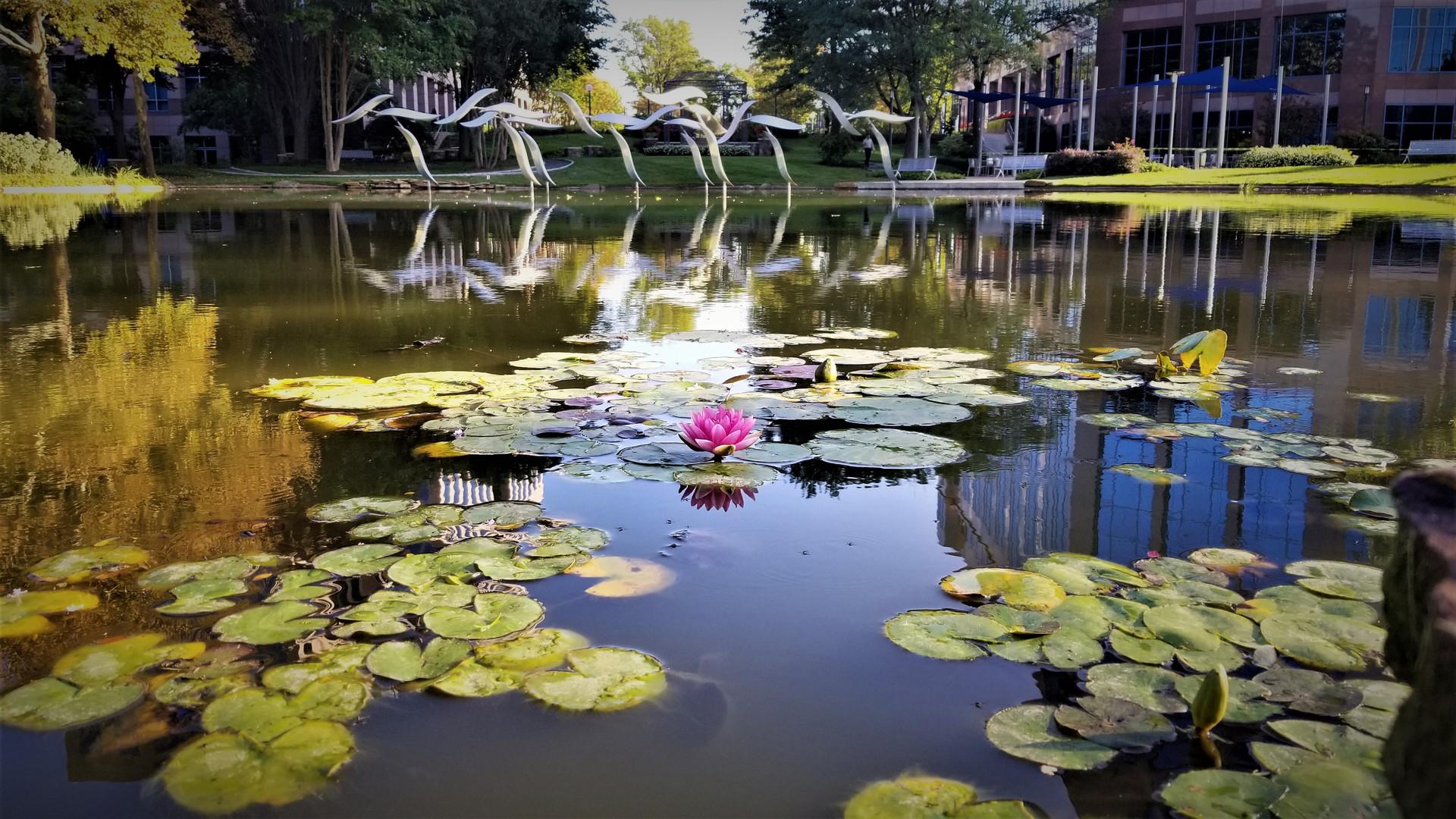 Lotus-Focused