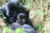 gorilla 3 187.JPG