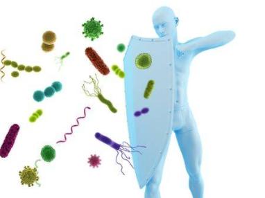 Lutte et systeme immunitaire