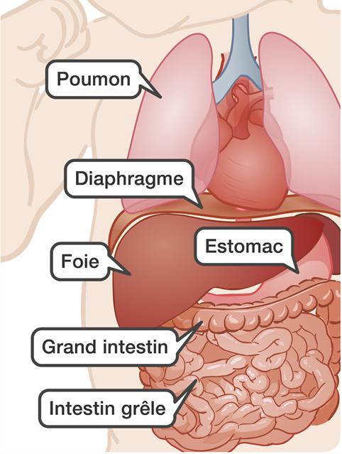 Anatomie abdomen