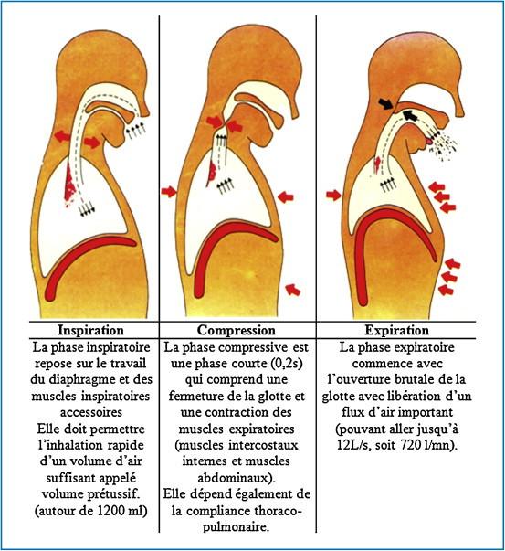 Mécanisme de la toux