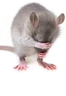 mouse-3194768_1280_edited.png