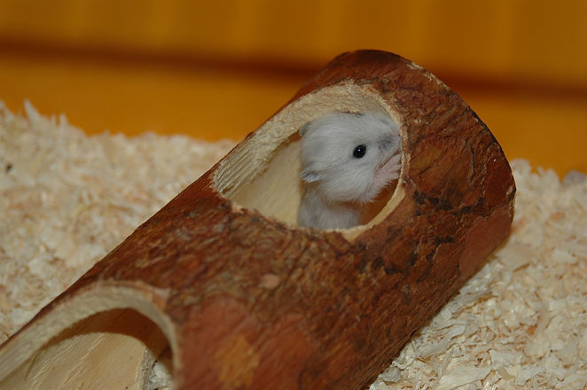 hamster-2759008_1280.jpg