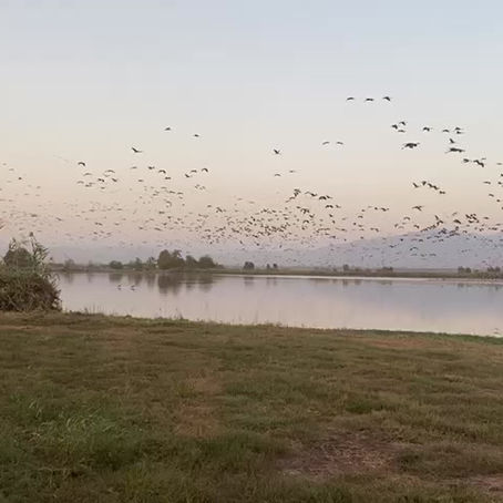 Ever Experienced 30,000 Cranes Flying Overhead?