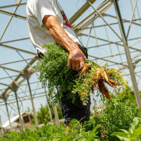 The Salad Trail - Tours this Sukkot