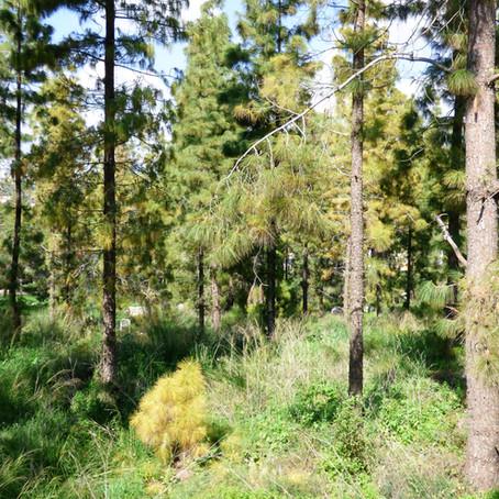 The Cyclamen Forest יער הרקפות