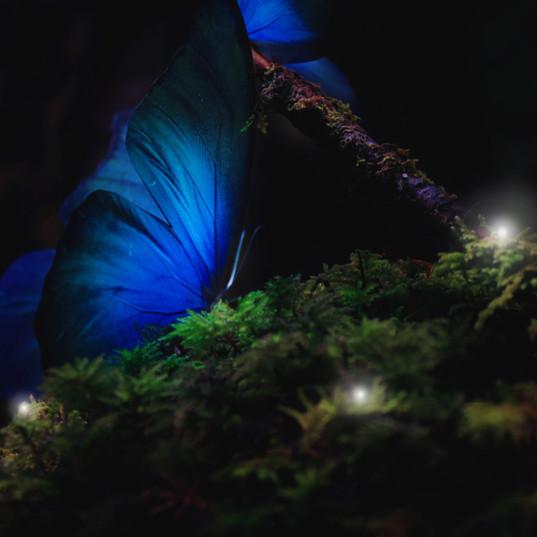 butterfly_IMG_6627.jpg