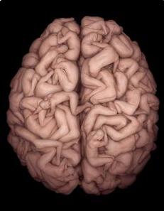 Sustancia presente en la Ayahuasca estimula la generación de células neuronales humanas