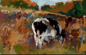 Holstein Grazing in Field
