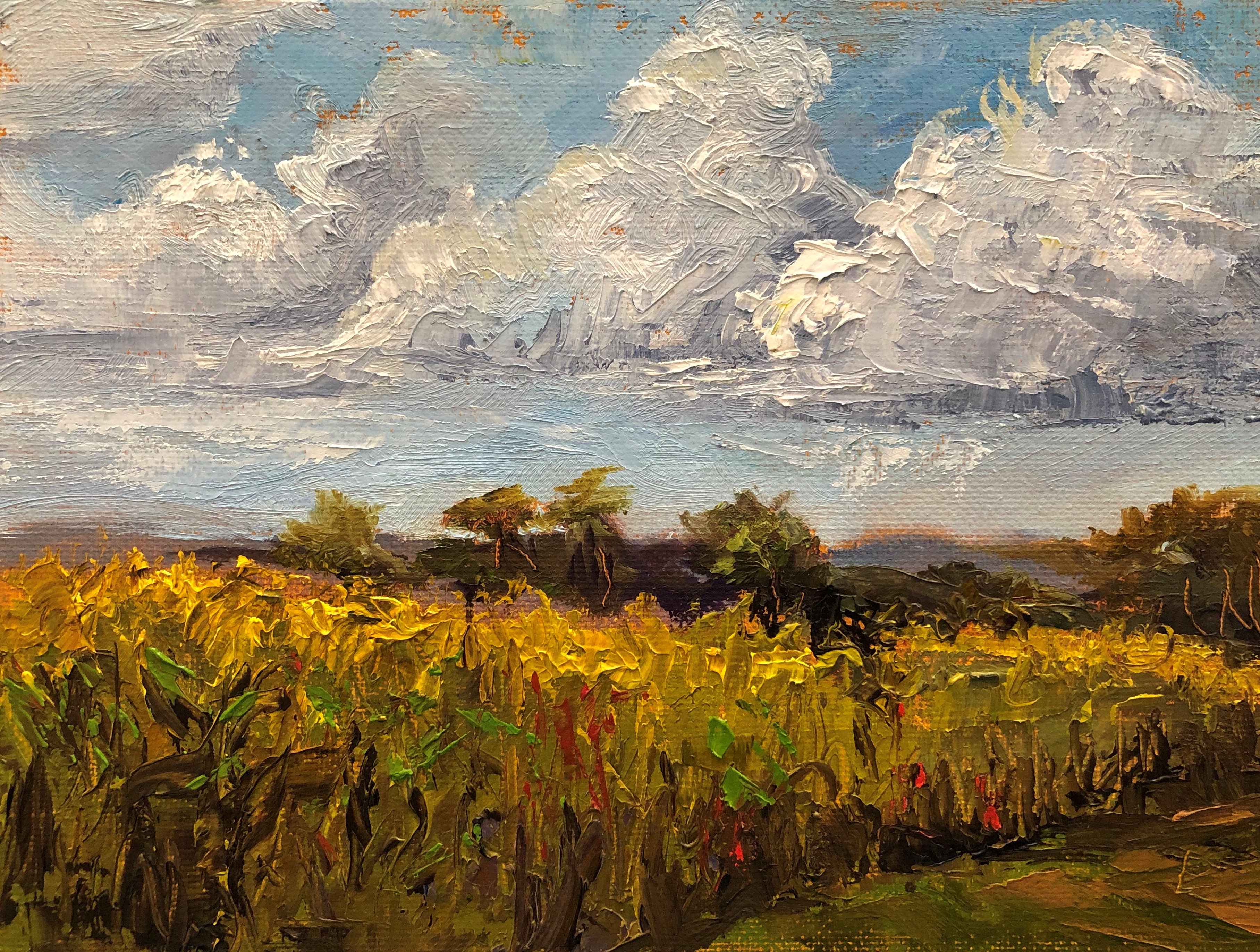 Virginia Donovan, oil, Corn and Clouds