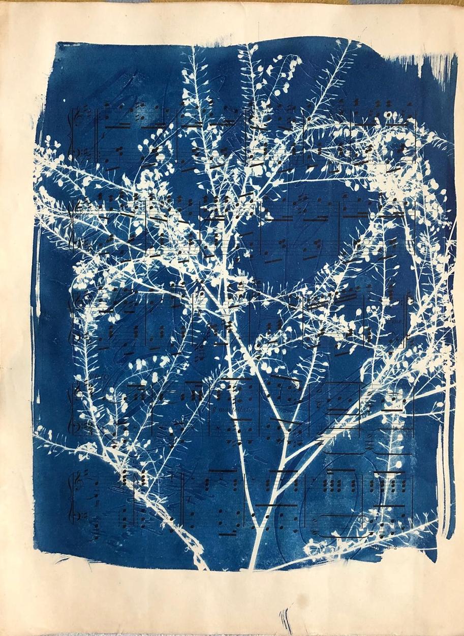 Cyanotype, Mary Ann Glass