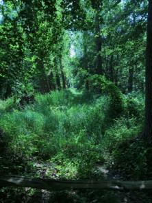 Het bos is als een magische wereld die ons uitnodigt