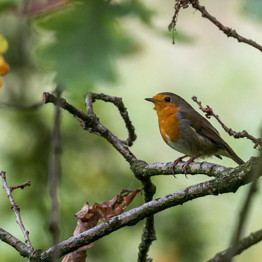 Wandelen en vogels kijken