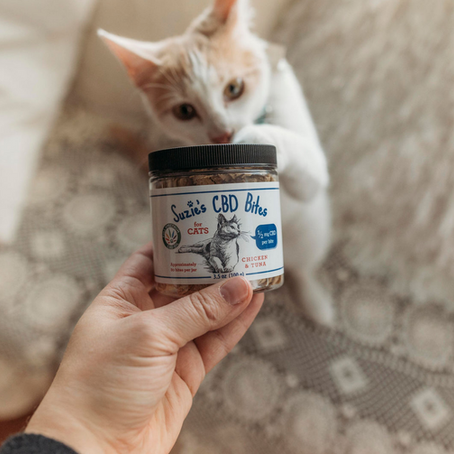 CBD for Cats Guide