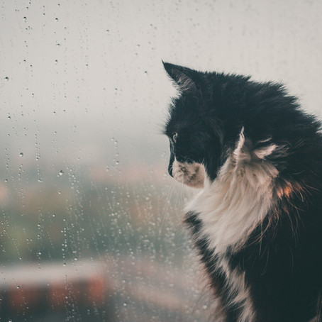 CBD for Storm Anxiety