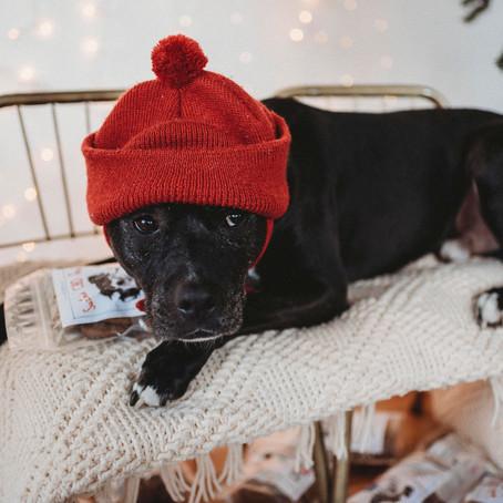 How CBD Can Help Your Pet Through Winter