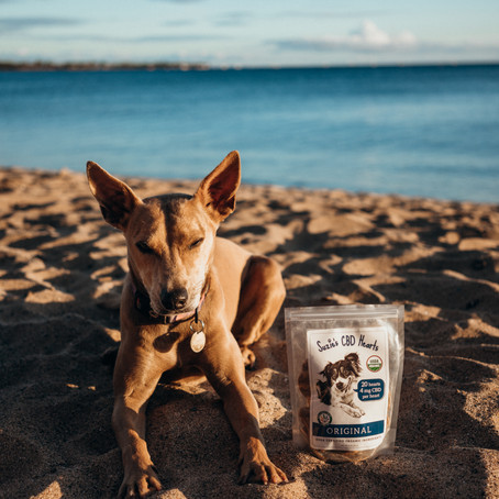 Keeping Your Pet Calm While You're on Vacation