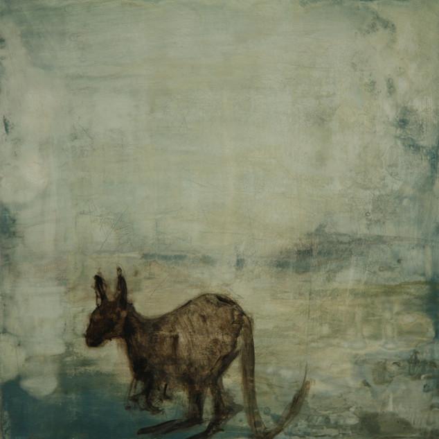 No country for a Kangaroo. 2012