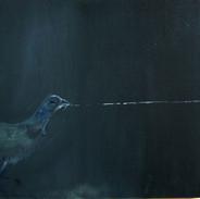 Pushing quail. 2011