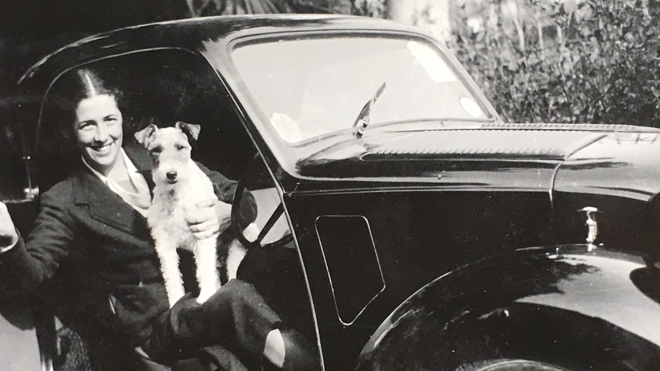 Fox terrier anni '40