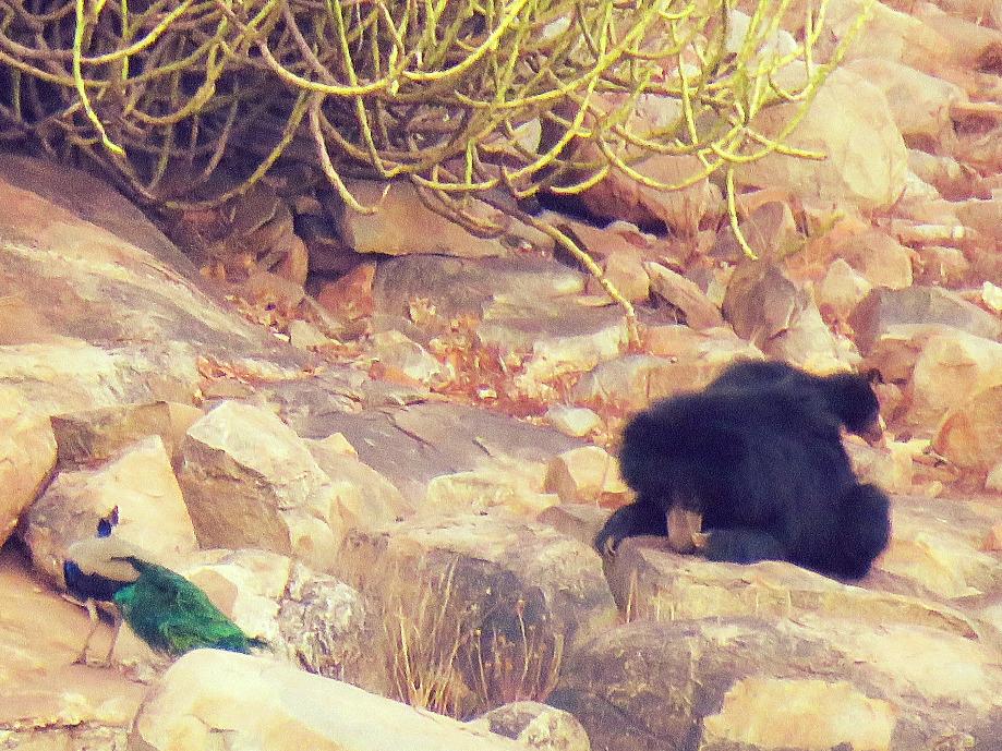 Mamma orsa con cucicolo_edited
